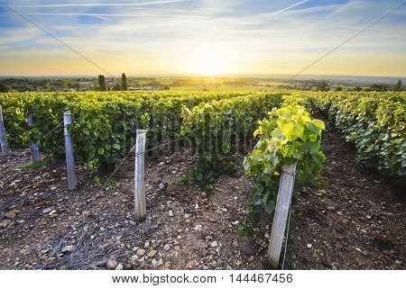 Sun Is Rising Over Vineyards Of Beaujolais, France