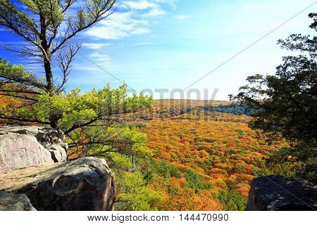Lone pine tree atop rock outcropping overlooking valley floor of  autumn color