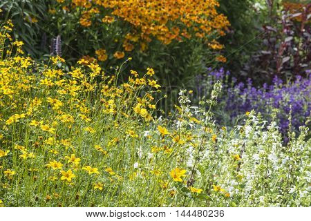 Beautiful Summer Landscape Image Of Vibrant Wild Flowers In Meadow With Selective Focus For Effect