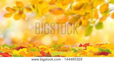 Fall Background With Foliage