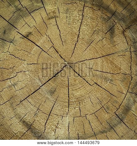 Tree section texture - Great for design wooden texture with the section of a tree trunk with its rings and cracks