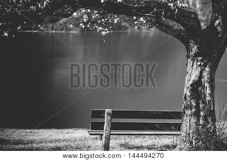 Wooden bench under blooming tree - Black and white image with a wooden bench under a flourishing tree on the high shore of the lake Walensee in the Swiss Alps. Picture taken near the village Unterterzen Switzerland