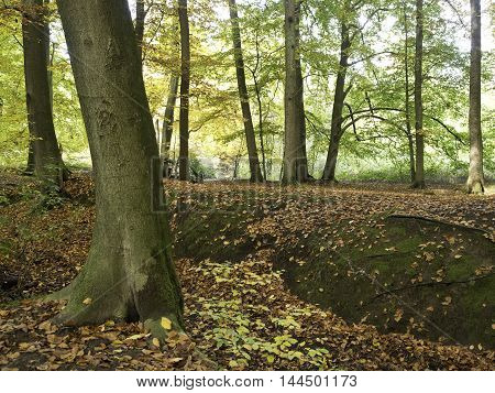 autumn in a forrest in the german muensterland