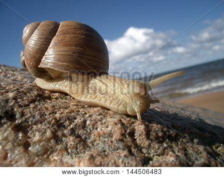 Snail beach animal sea stone summer sky house sun sunburn horns