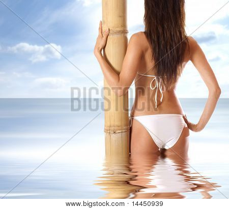 Back of sexy lady wearing swimsuit isolated on white poster