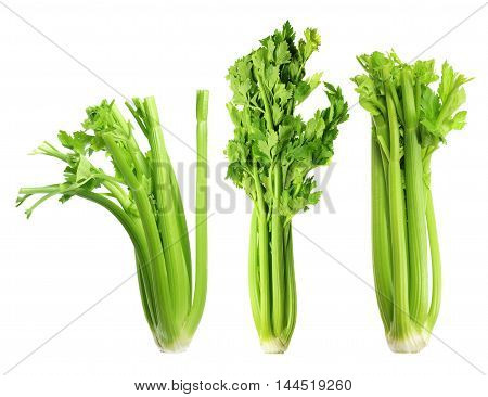 Bunches of Celery on a White Background