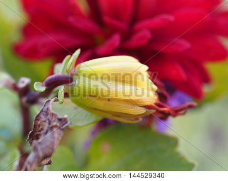 Close Up Of Colourful Flowers Blossom Background