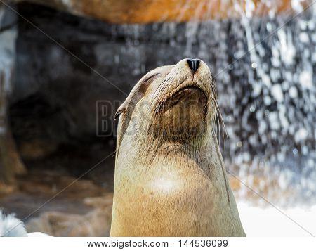 Close Up Of Sea Lion