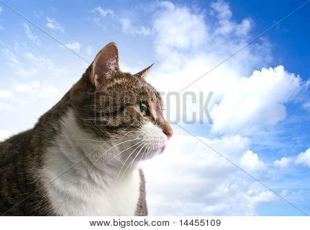 Head of big fat cat over sky background