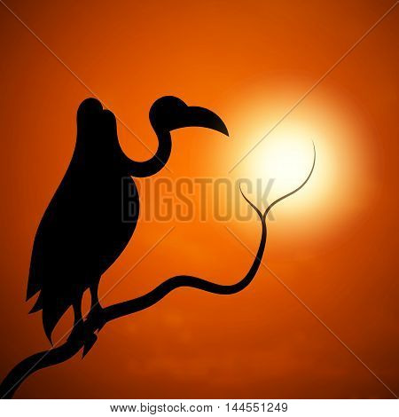 The silhouette of a vulture sun branch sunset