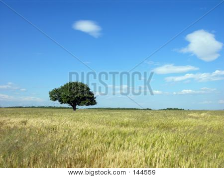 Lonely Tree Background