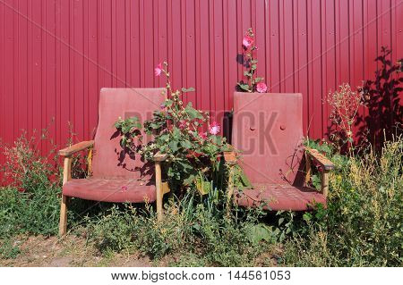 Two old rusty empty red armchairs standing in flowers next to a metal red fence horizontal view
