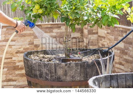hands with garden hose, person filling watering can with garden hose, hands with garden hose