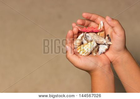 Shells in the hands of a child. Child hands holds shells and starfish. Summer background with sand and shells,