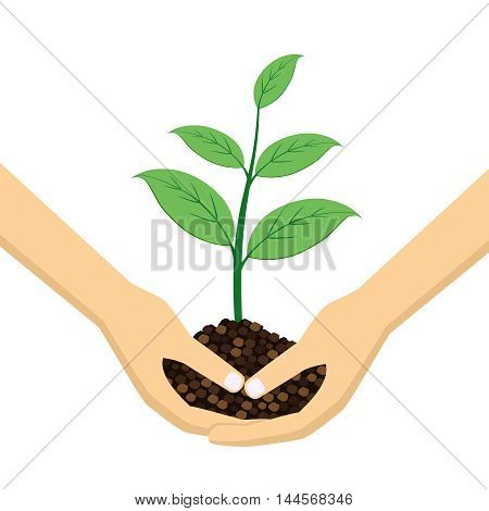 Two Hands holding young plant on the white background.
