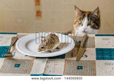Cat playing with little gerbil mouse on the table with plate and serving cutlery. Concepts of prey, food, pest.