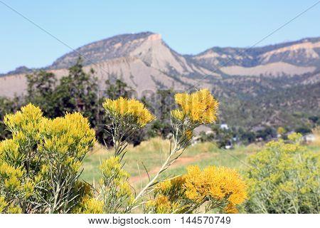 Sun\mer at the La Plata mountains in Durango, CO