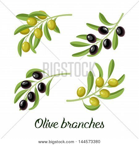 Vector set of realistic olive branches with green and black olives. Vector illustration for labels, packs, logo design.