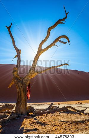 On the tree hangs a beautiful multicolored silk scarf. The bottom of dry lake with dry trees in Namib-Naukluft National Park