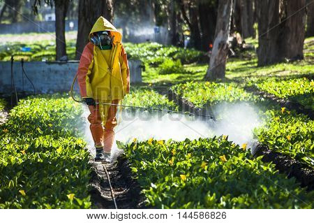 Guayllabamba Ecuador - MAY 14 2015: Technical wearing appropriate clothing fumigating a flower plantation outdoors.