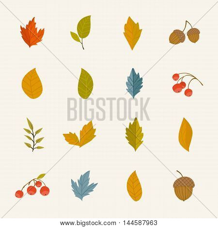 Autumn leaves isolated collection vector illustration. Hand drawn autumn leaves in cartoon style. Design elements. Autumn leaves concept. Different autumn leaves. Abstract leaves. Autumn elements. Autumn.
