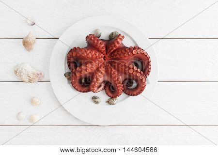 Whole fresh raw octopus on white plate with tentacles copy space. Seafood delicatessen ready for cooking with sea shells on white background. Mediterranean meal, luxury food concept