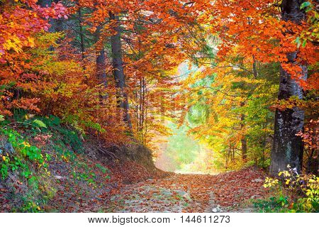 Autumn Autumn Fall Leaves colors in wild forest landscape with ground road