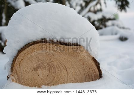 cut tree shows in sectional area its growth rings and is snowy