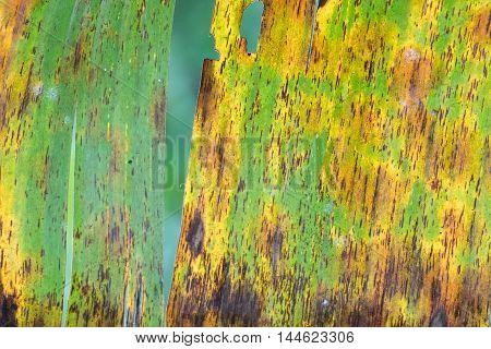 Banana Leaf Close Up Detail Macro View