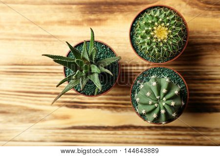 Small cacti and succulent in pots on wooden background, top view