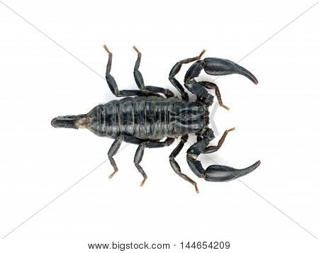 Image of scorpion on a white background.