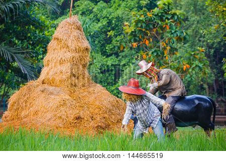 Thai Style Scarecrow in a Green Rice Field