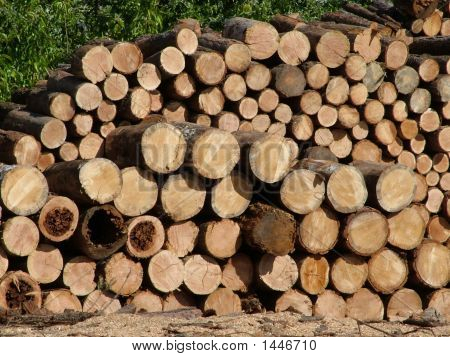 Chopped fire wood stacked into a
