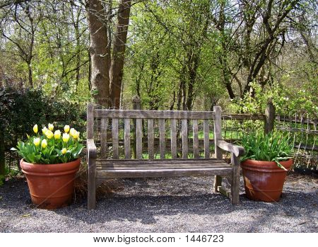 Tulip Planter By Bench