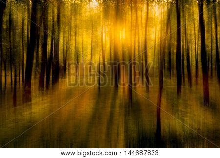 blurred abstract background photo of natural forest with misty sun light shining out of the treetops with surreal motion blur effect