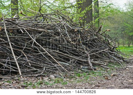 Heap Of Firewood In Forest