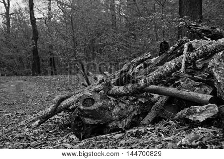 Heap Of Firewood Black And White