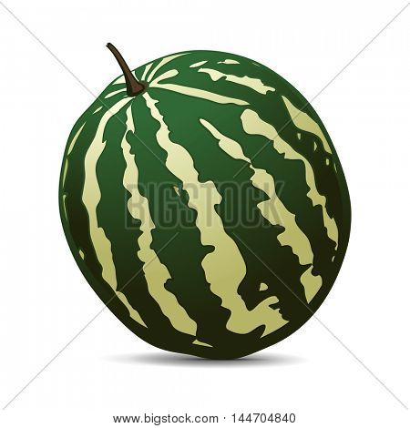 Ripe Watermelon on white background. Hand drawn vector illustration.