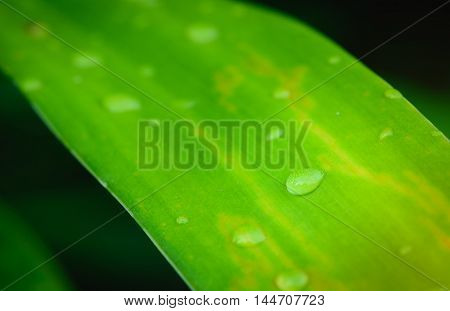 Water drop on green leaf background. Selective focus