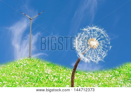 Close up of a dandelion in the meadow with sunlight background a wind turbine against blue sky.