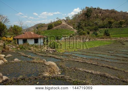 The ricefield in Cara with circular forms - Ruteng city in Flores - Indonesia.