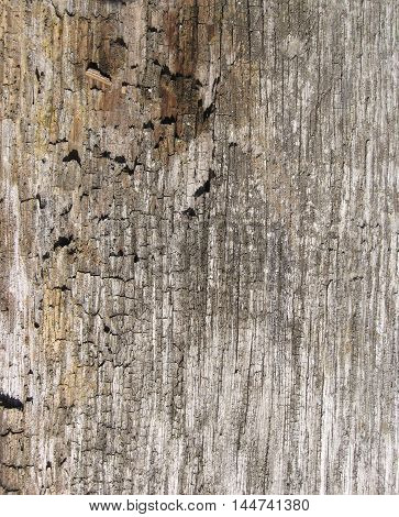 Old wood texture. Photo rough texture of an old tree