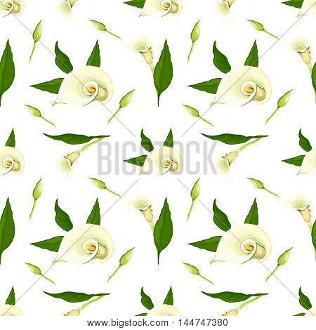 Floral vector pattern with callas. Realistic style on a white background.
