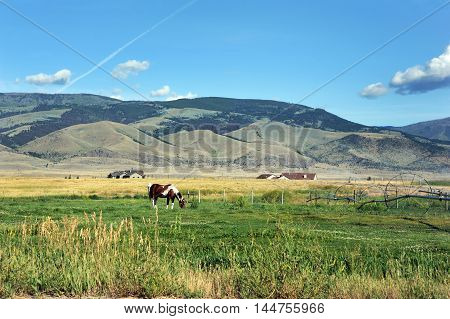 Horse ignores irrigation system as it sprays water on pasture. Beautiful Gallatin Mountains rise in background behind farm houses.