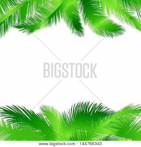 Floral background. Summer leaves flourish border. Plam leaf frame vector illustration