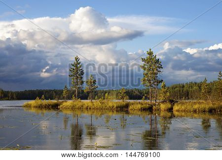 Landscape of wild forest lake in Finland this summer