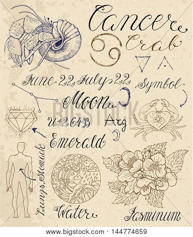 Collection of hand drawn symbols for astrological zodiac sign Cancer or Crab. Line art vector illustration of engraved horoscope set. Doodle drawing and sketch with calligraphic lettering