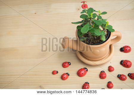 Wood floor with Euphorbia milii flower on terracotta flower pot and red ladybug Animal finding the trees concept.
