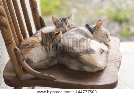 cat family sleep together on the chair