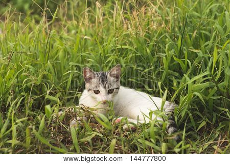 little cat in the grassland